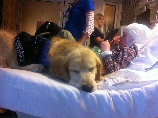 Treating Sleep Disorders with Service Dogs