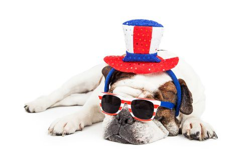 patriotic sleeping bulldog