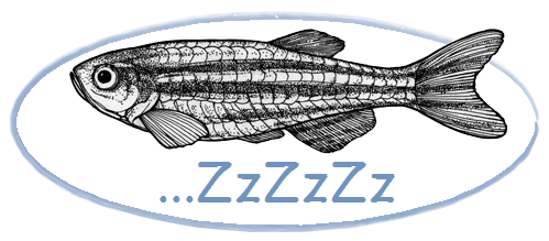 sleeping zebrafish